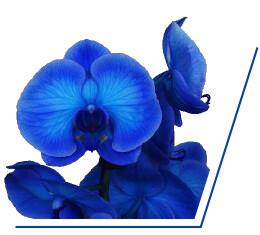 colorchild-blue