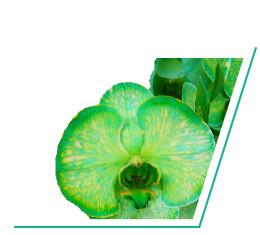 colorchild-green