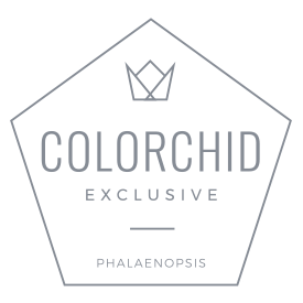 colorchild-logo