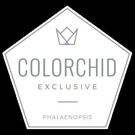 colorchild-logo