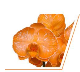colorchild-orange