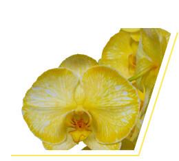 colorchild-yellow