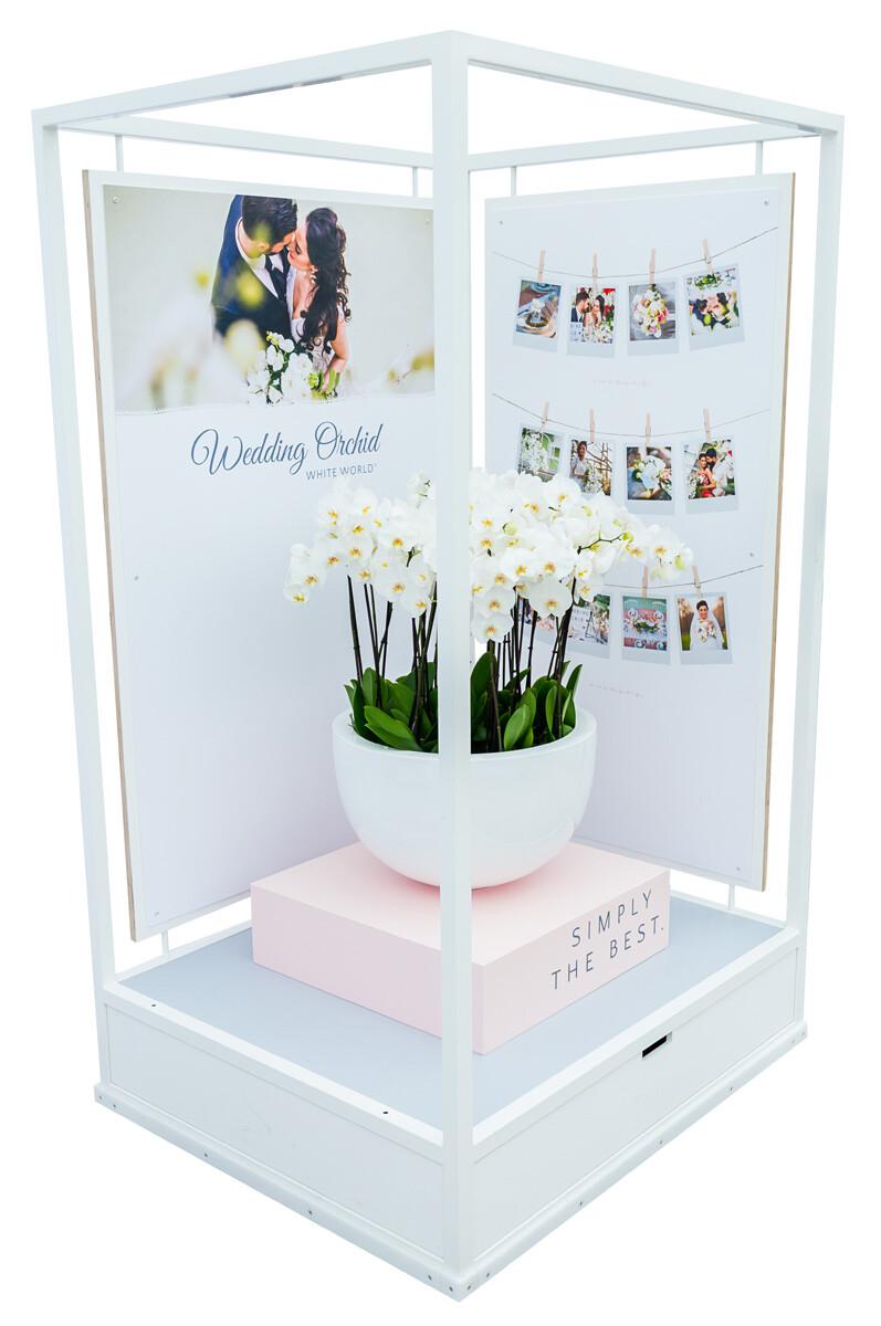 Wedding-Orchid